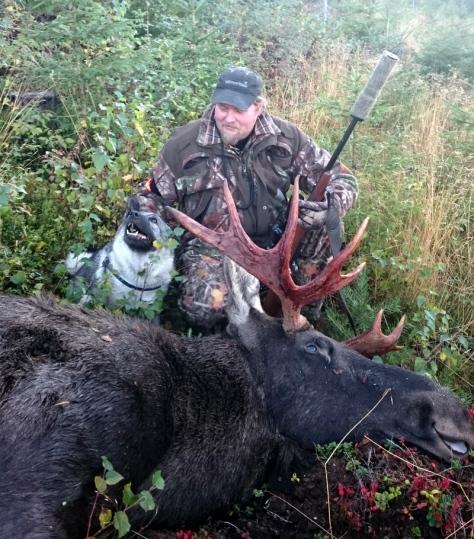 Kjetil Martinsen fikk god hjelp av løshunden til å felle den 13 spirs store elgoksen